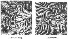 vân tay double loop và accidental - một trong chủng vân tay hiếm nhất