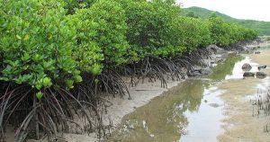 việt nam có diện tích rừng ngập mặn đứng thứ mấy trên thế giới