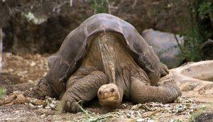 những loài động vật quý hiếm nhất thế giới